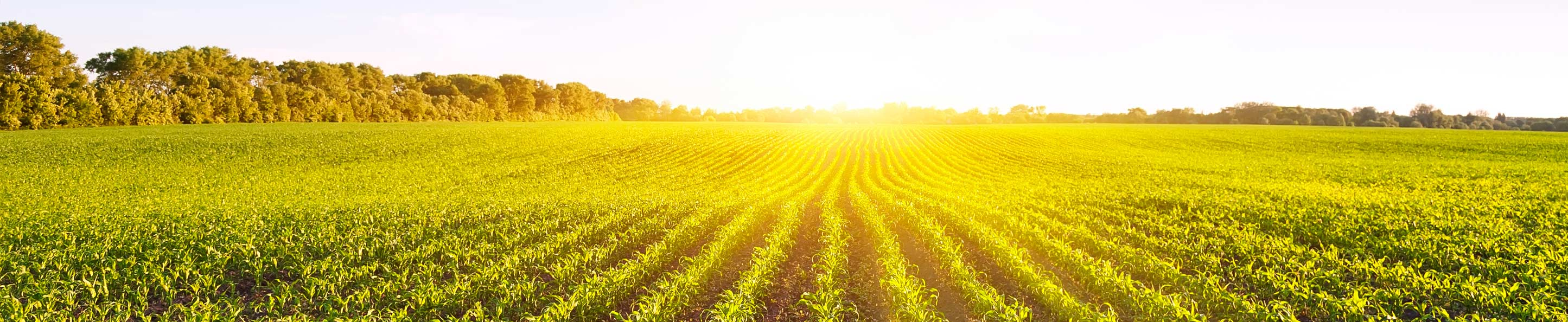 agricultural loan Offering a broad range of agricultural loan, leasing and insurance services from orchard, timber, row crops, winery and livestock financing to equipment leasing and construction financing.